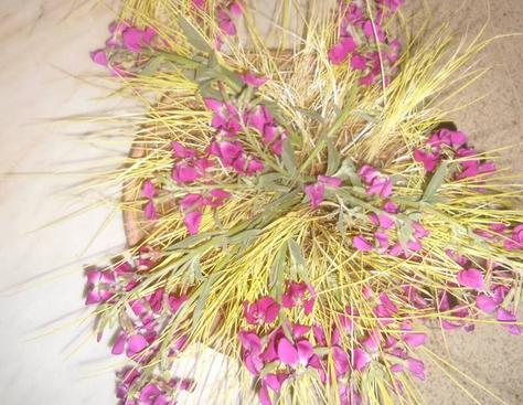 il Mercoledì delle Ceneri si prepara il grano per i germogli