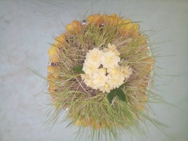 germogli di grano per allestire il Sepolcro del Giovedì Santo