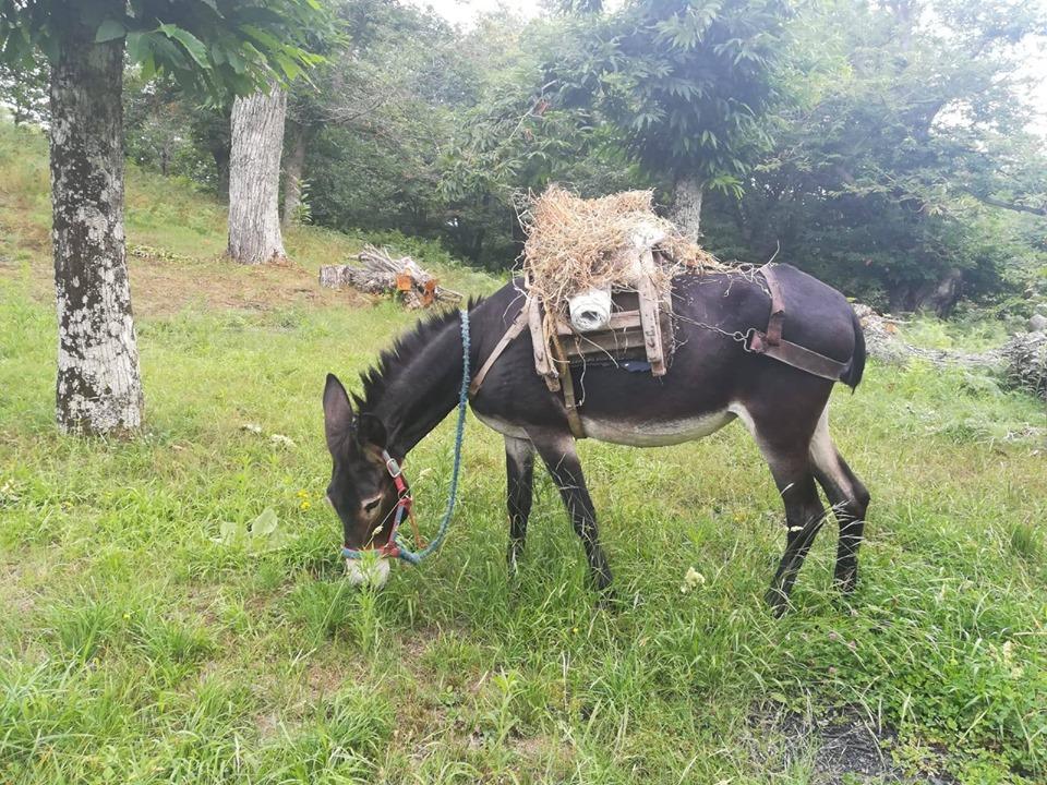 Mandia, ripartono le attività di 'Rareca Village'